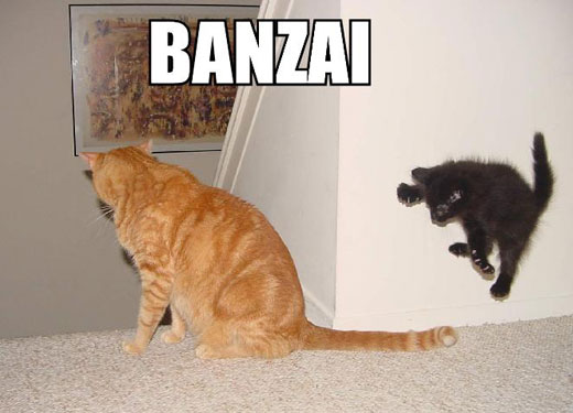 Cats - Banzaiiii
